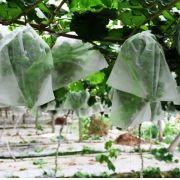 Sacos Em Tnt Para Proteção De Frutas No Pe 28 X 45cm Branco  com Amarril