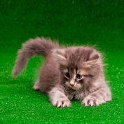 Grama Sintética Pet Love Atóxica para seu Pet - 12mm - Verde