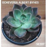 ECHEVERIA ALBERT BYNES