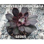 ECHEVERIA HANAIKADA