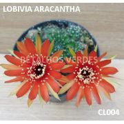 LOBIVIA ARACANTHA