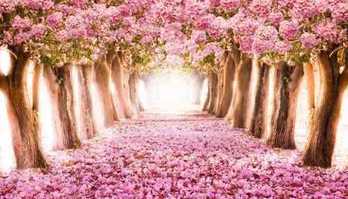 Painel Lona Floresta Jardim Encantado mod01