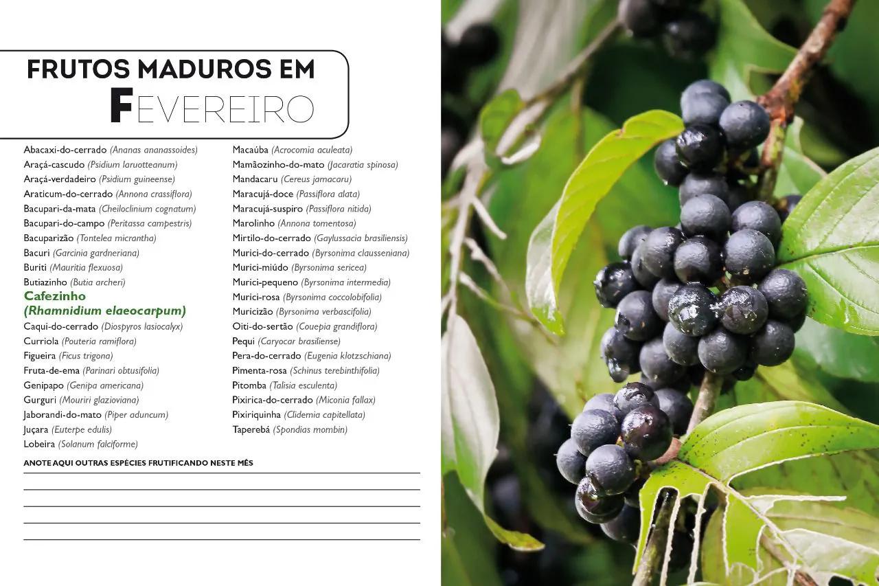 Frutos do Cerrado - Guia de Coleta 100 espécies atrativas para homo sapiens
