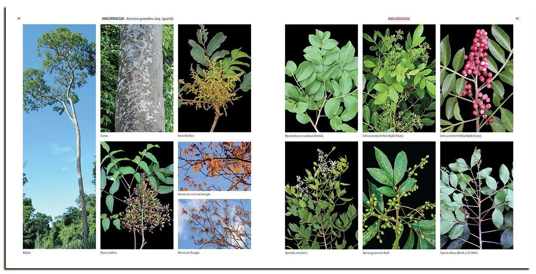 Guia das Plantas da Mata Atlântica- Floresta Estacional