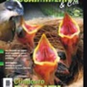 Revista Passarinheiros N40