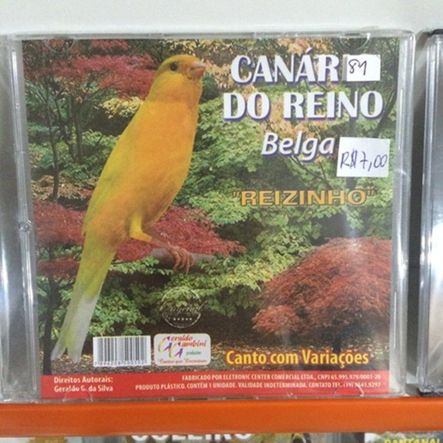 CD canario do reino Belga REIZINHO