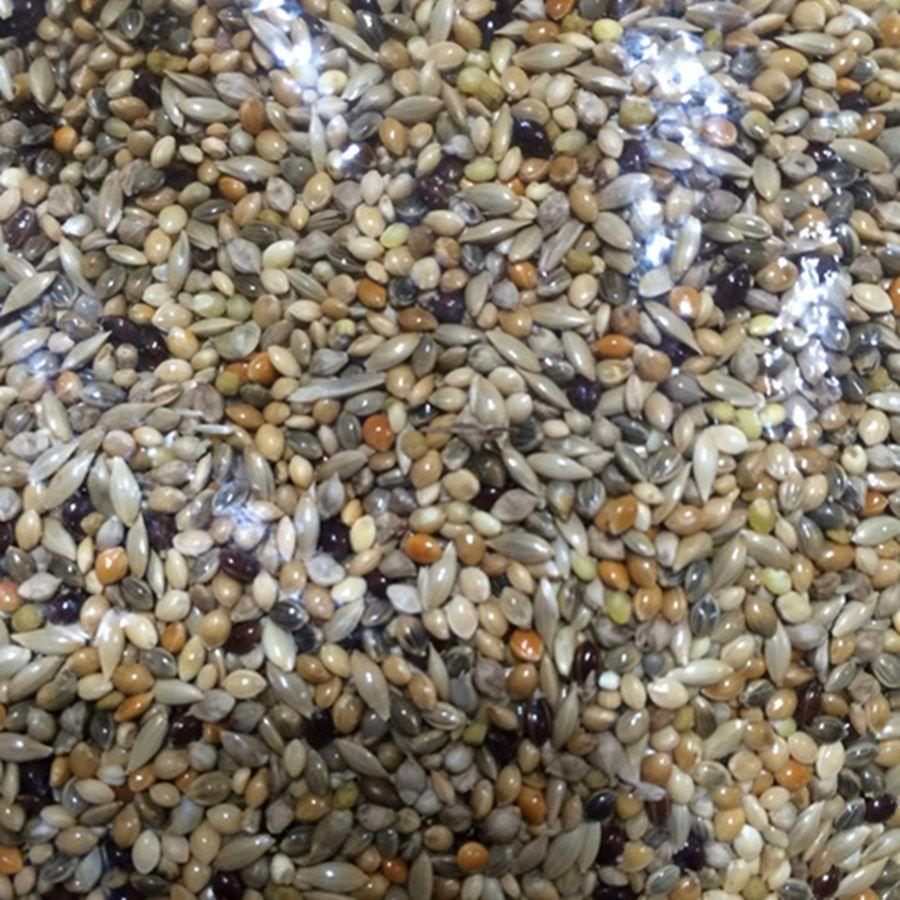 Mistura especial para Coleirinha e Sporophilas em geral 500g