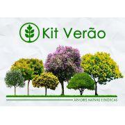 Kit Verão - 120 Sementes de Árvores Nativas e Exóticas - Mundo das Sementes