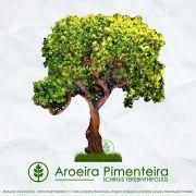 Sementes de Aroeira Pimenteira / Pimenta Rosa - Schinus terebinthifolius - Mundo das Sementes