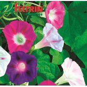 Sementes de Ipoméia Púrpura Sortida - Feltrin