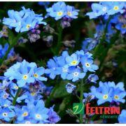Sementes de Miosotis Alpestris Azul - Feltrin