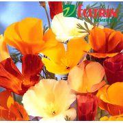 Sementes de Papoula da Califórnia Sortida - Feltrin