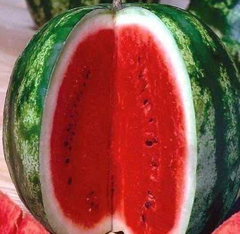 Sementes de Melancia Crimson Sweet - Atacado - Feltrin
