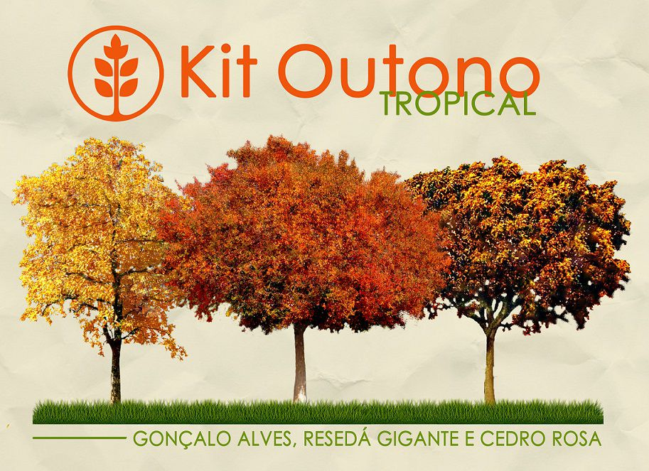 Kit Outono Tropical - 150 Sementes - Gonçalo Alves, Resedá Gigante, Cedro Rosa - Mundo das Sementes