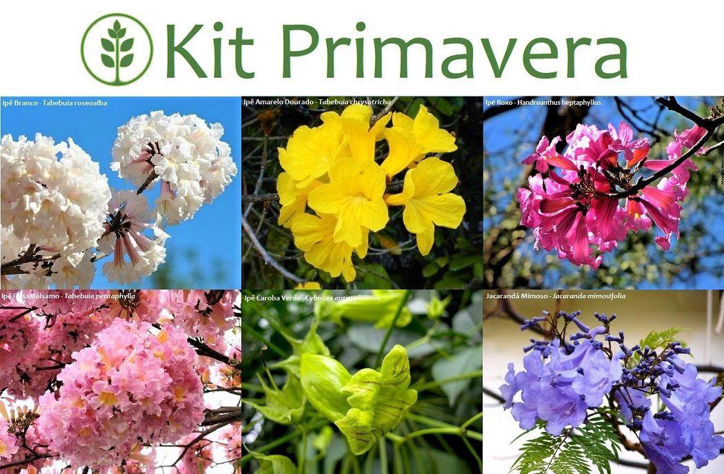 Kit Primavera - 60 Sementes - Mundo das Sementes