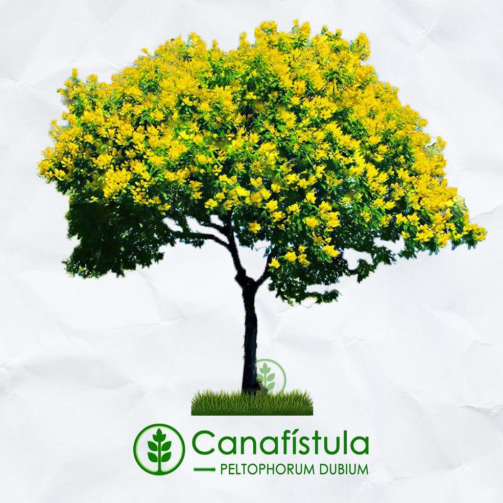 Kit Verão - 300 Sementes de Árvores Nativas e Exóticas - Mundo das Sementes