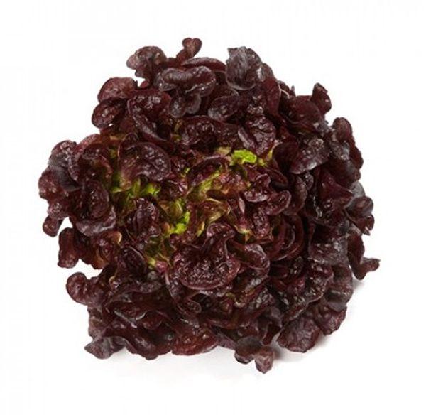 Sementes de Alface Mimosa Roxa Salad Bowl - Feltrin
