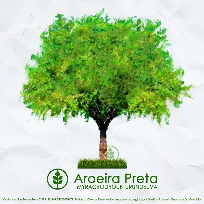 Sementes de Aroeira Preta Verdadeira - Myracrodruon urundeuva - Mundo das Sementes