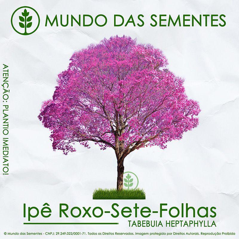 Sementes de Ipê Roxo - Handroanthus heptaphyllus - Mundo das Sementes