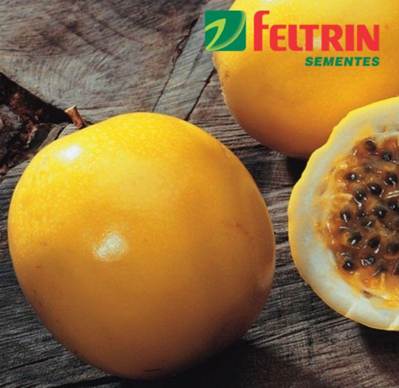 Sementes de Maracujá Amarelo Azedo - Feltrin
