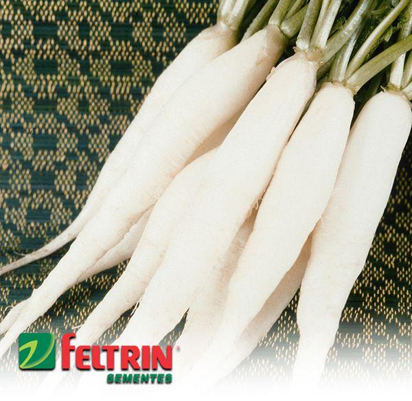 Sementes de Rabanete Branco Comprido - Atacado - Feltrin