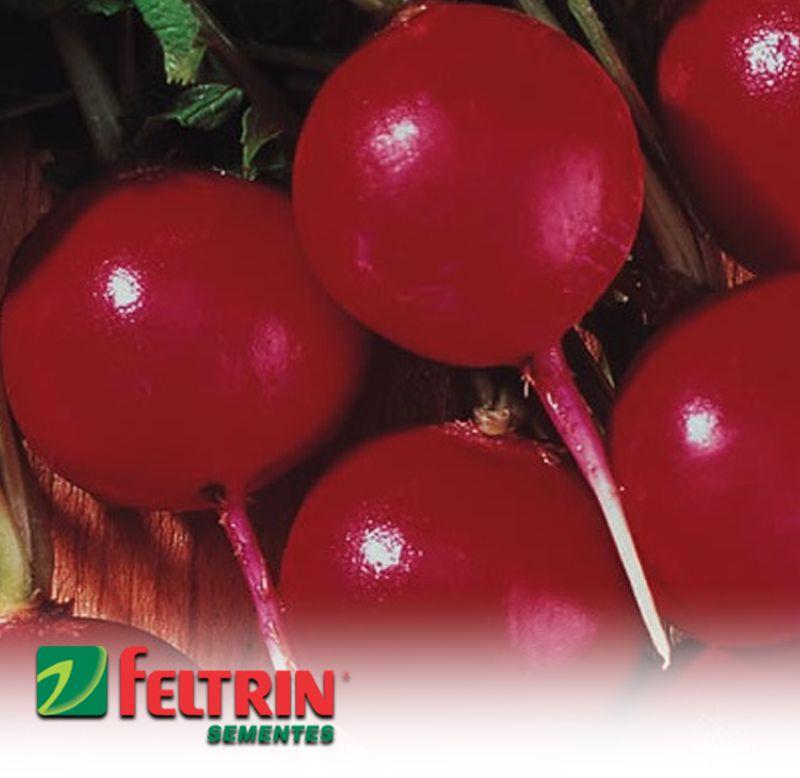 Sementes de Rabanete Crimson Gigante - Atacado - Feltrin