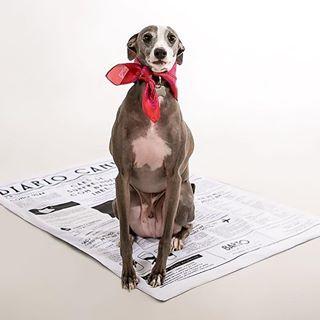 2 Diário Canino Meu Bartô - O Melhor Tapete Higiênico para Cães