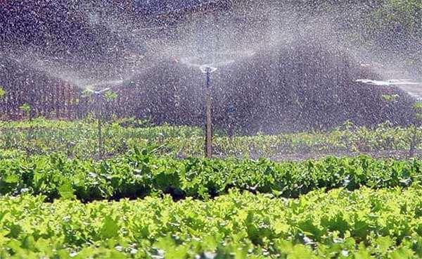 Aspersor para Irrigação P3