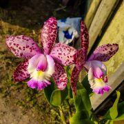 Blc. Cruzeiro do Sul Pink Spots - Adulta