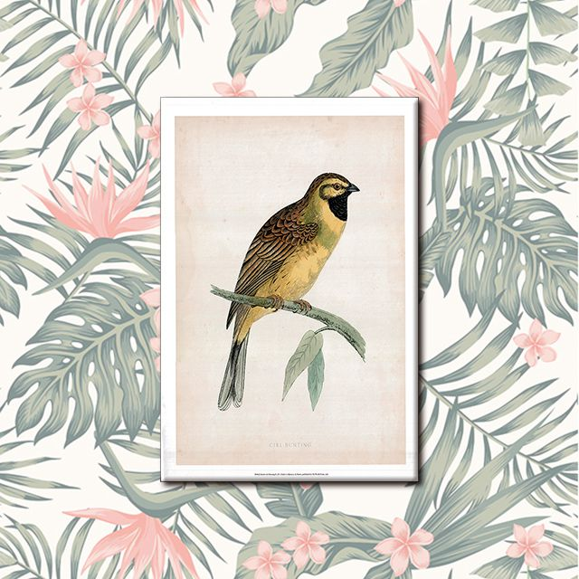 Poster Decorativo Pássaro PL309