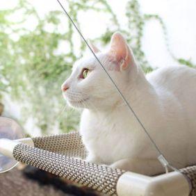 Cama de Gato para Janela Gatton Catbed Aloha