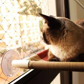 Cama de Gato para Janela Gatton Catbed Listrada Vermelha