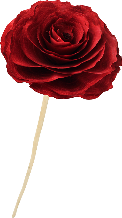 Flor de madeira -Camélia
