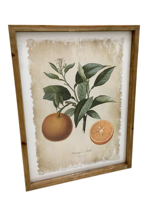 Gravura Citrus