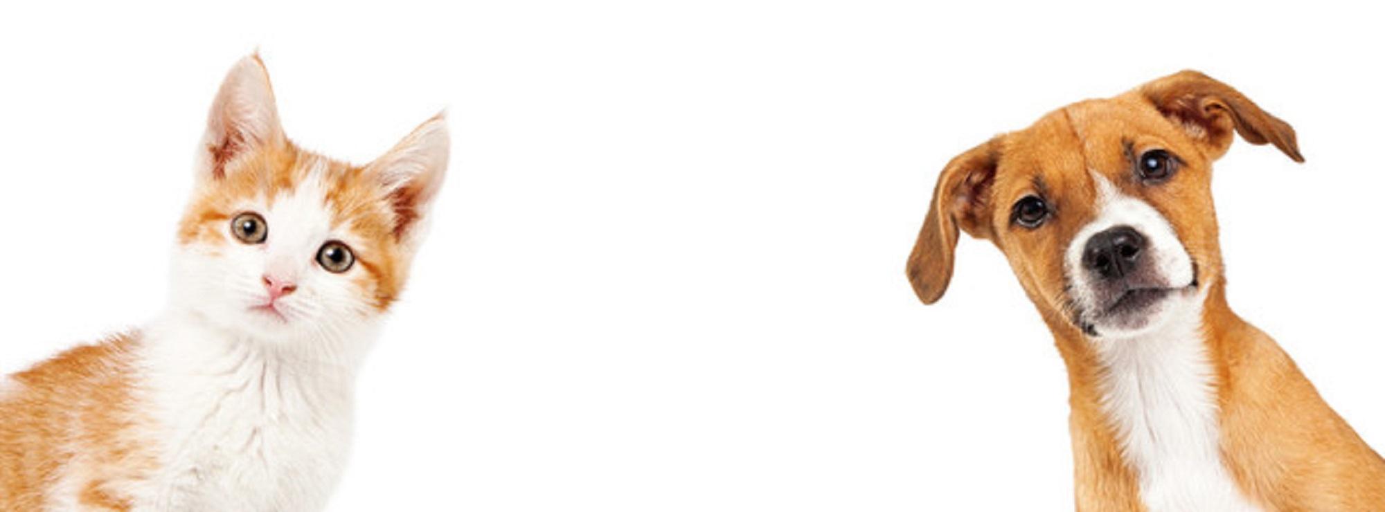 Comedouro para Cachorro Tigela Inox Individual Bebedouro Acrílico