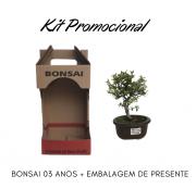 Kit Promocional Bonsai 03 anos + Embalagem de presente