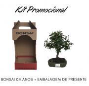 Kit Promocional Bonsai de 04 anos + Emabalagem de presente