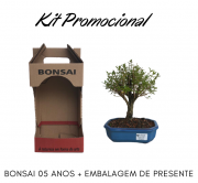 Kit Promocional Bonsai de 05 anos + Embalagem de presente