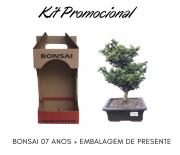 Kit Promocional Bonsai de 07 anos + Embalagem de presente