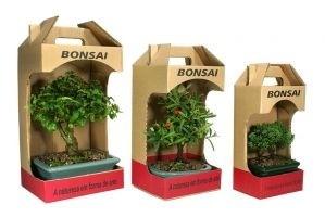 Kit Promocional Bonsai de 03 anos + Embalagem de presente