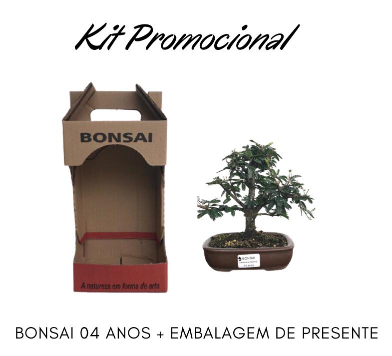 Kit Promocional Bonsai de 04 anos + Embalagem de presente