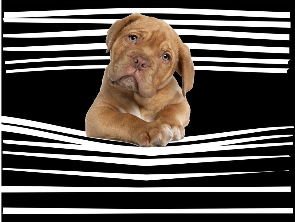 Máscara Personalizada - Coleção 4 Patas - Cachorros - Escolha o seu