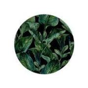 Prato sobremesa Leaves