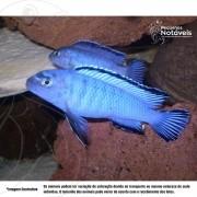 Socolofi Azul 4 a 6 cm