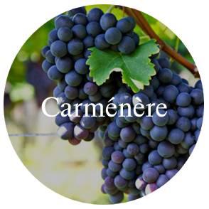 vinhos/carmenere