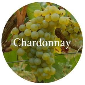 vinhos/chardonnay