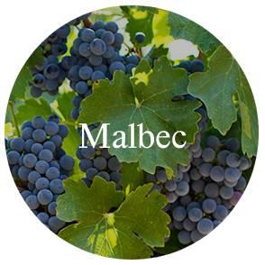 vinhos/malbec