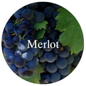 vinhos/merlot
