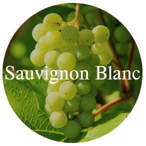 vinhos?loja=1022248&categoria=1&prices=0%252C4819&variants%5B%5D=Uva%7C%7CSauvignon+Blanc
