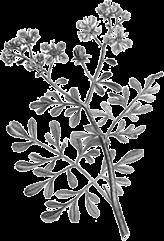 Imagem de uma flor na cor cinza